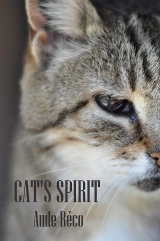 Cat's spirit